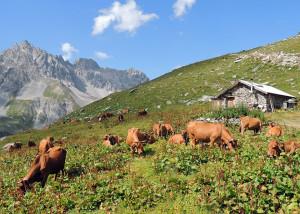 Alpage au coeur du Parc de la Vanoise